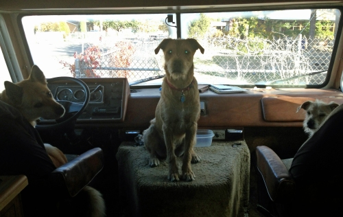 photo of our dogs in the RV